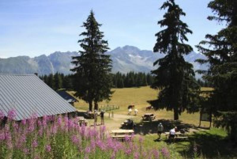Entre forêt et alpage au Crêt du Poulet